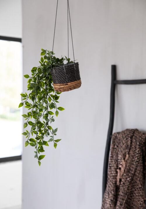 hangplant in hangmand