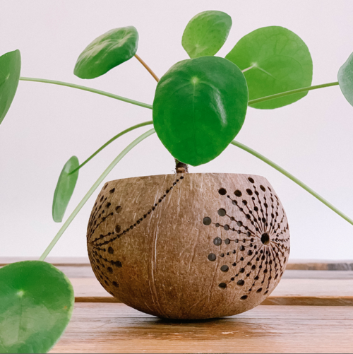 the sunshine candleholder made from coconut shell with plant