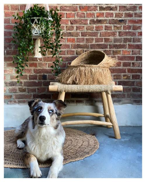 hond met op achtergrond een kruk en manden en een macreme witte plantenhanger met een plant erin