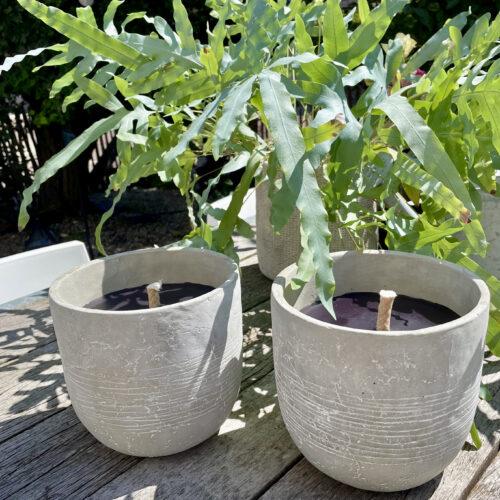 twee kaarsen in aardewerken pot op houten tafel met op achtergrond een varen.